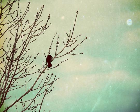bird--tree-bird-nature-still-life-winter-fall-autumn-wall-decor-landscape-portrait-amelia-kay-photography